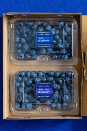 画像2: 【送料込み】果物の恵み フレッシュブルーベリー (約 600g ) 贈答品