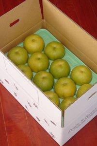 【送料込み】果物の恵み 二十世紀梨 約5kg Lサイズ 7個〜14個入り